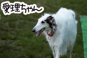 Doggies0158