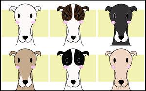 Grayhound7